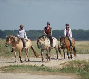 Baie-paardrijden-300x265